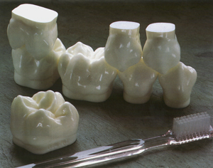 GIANT POSTERIORS DEMONSTRATOR MODEL - SET OF 8 TEETH